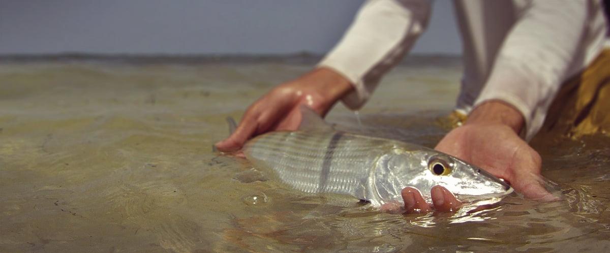 Bonefish Release Technique