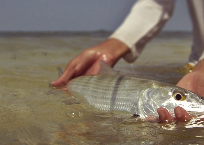 #keepemwet Cayman Bonefish Release Technique